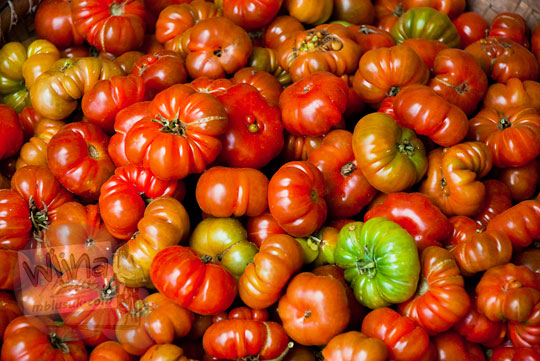 tomat keriput yang dijual di pasar sentral malino, sulawesi selatan
