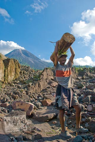 Warga desa Cangkringan pulang dari hutan membawa bonggol kayu melintasi wilayah Kaliadem di tahun 2009